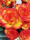 Роза в ассортименте красно-желтая