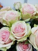 Роза в ассортименте бело-розовая