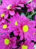 Хризантема кустовая в ассортименте розовая