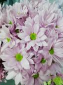 Хризантема кустовая в ассортименте нежно-розовая